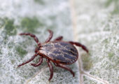 Nutritional Guidance for Lyme Disease