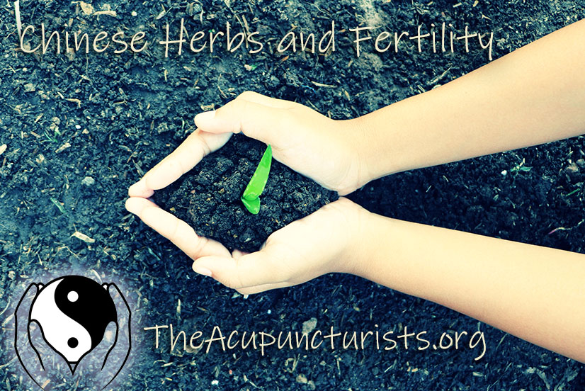 Chinese herbs for Infertility in Margate, Coral Springs and Coconut Creek Florida